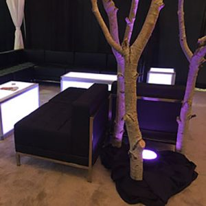 trees along side black lounge chairs